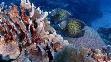 Photo of Estudio revela deterioro de salud del arrecife mesoamericano