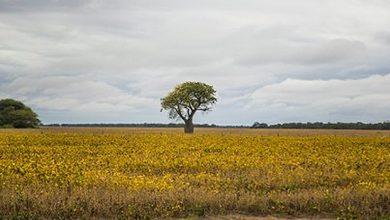 Photo of Deforestación: la crisis del COVID-19 resalta más que nunca la necesidad de salvar los bosques