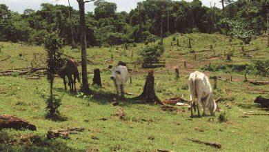 Photo of Guatemala ha perdido en los últimos 20 años casi una cuarta parte de sus bosques